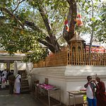 Photo of Jaya Sri Maha Bodhi