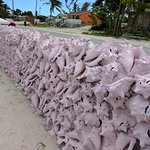 wall of conch shells