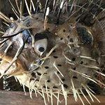 Herringbone La Jolla Photo