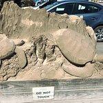 Foto de Sea Turtle, Inc.