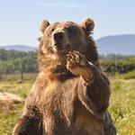 Say hi to the waving bears as you drive through the farm!