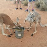 Foto de The Kangaroo Sanctuary