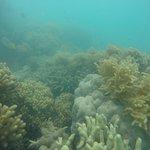 Photo of Ocean Rafting
