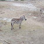 Foto de Dublin Zoo