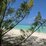 Caribbean Cruisin Charters, Tours & Excursions Foto