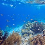 Gorgeous reef filled with life and fish!