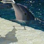 Foto de Siegfried & Roy's Secret Garden and Dolphin Habitat