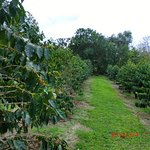Photo of UCC Hawaii Kona Coffee Estate