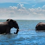 Adventure awaits! Game viewing by boat is a great way to spend your days