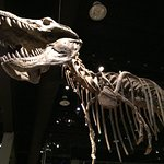 Photo of Royal Tyrrell Museum
