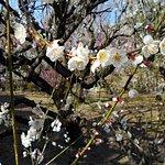Photo of Bairin-ji Temple