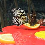 Feeding on fruits