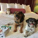 Our doggies enjoying their goodies from the hotel and the bed