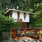 """The Monkey House.  """"It's like living in a treehouse,"""" say our guests."""