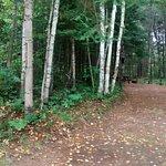 Wilderness Campsites