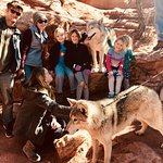 Wolf Visit!
