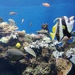 Photo of Waikiki Aquarium