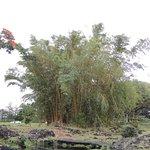 Bamboo Liliuokalani Gardens/Park