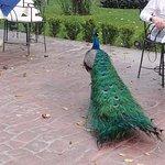 Foto de The Peacock Garden