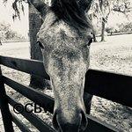 Foto de Farm Tours of Ocala