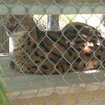 Photo of McCarthy's Wildlife Sanctuary