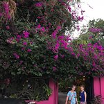 The huge bougainvillea at the entrance.