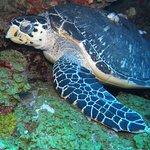 Φωτογραφία: Sea Saba Advanced Dive Center