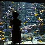 Antalya Aquarium Foto