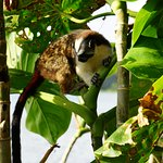 Tamarin on the wildlife tour, too cute