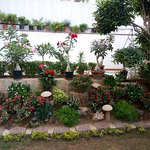 colourful vibrant and very meticulously maintained garden