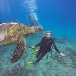 Photo de Oahu Diving