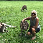 All Roos are friendly