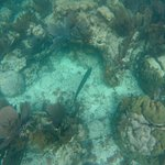 Photo of John Pennekamp Coral Reef State Park
