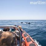 Dolphin watching from the guide and skipper's perspective   Observação de golfinhos pela perspec