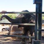 Photo de Phoenix Zoo