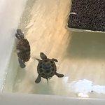 Bilde fra Georgia Sea Turtle Center