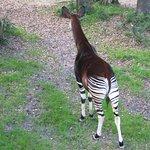 Foto van Jacksonville Zoo & Gardens