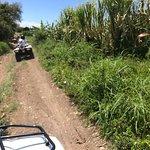 passage dans les champs de canne à sucre