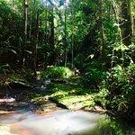 Foto van Narrows Escape Rainforest Retreat