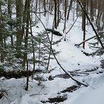 trail to Tinker Falls