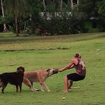 Dogs to play with!