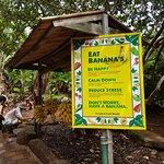 Tropical Fruit World Photo