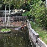 ภาพถ่ายของ สวนสัตว์สงขลา