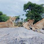 Lions, Serengeti National Park, 4.3.2018