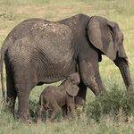 Elephant with Baby, Tarangire National Park, 26.2.2018