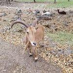 Foto de Natural Bridge Wildlife Ranch