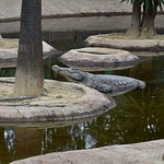 Foto de Crocodile Park