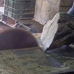olive wood cutting  bethlehem