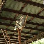 Photo of Australia Zoo