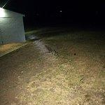 wallaby di notte